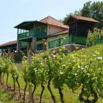 Feravino-winery-1