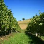 Daruvar-Badel-winery-9