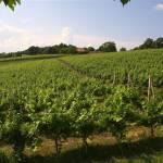 Miklaužić-winery-4